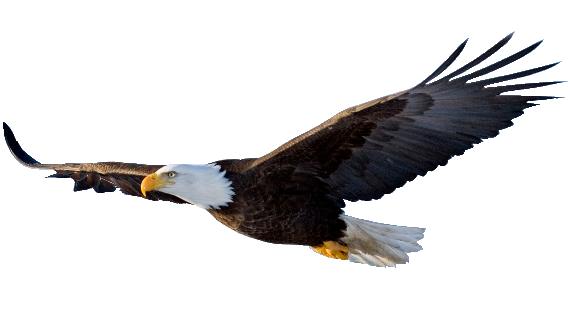Download Flying Eagle File HQ PNG Image | FreePNGImg