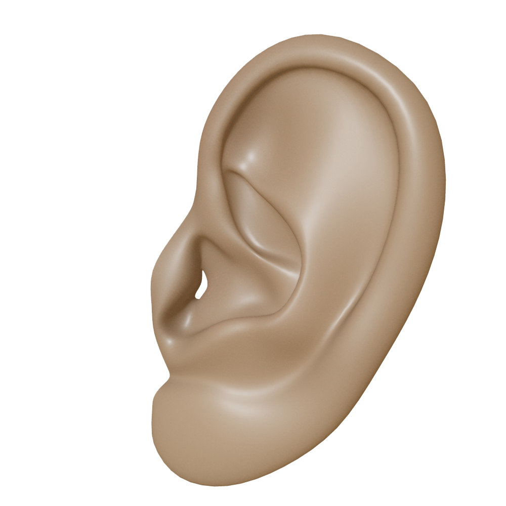 Ear Png Clipart PNG Image