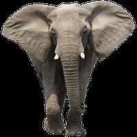 Elephant Free Download Png<B>素材格式</B>: PNG<B>素材尺寸</B>: 600x600<B>檔案大小</B>: 353.7KB<B>推薦人數</B>: 2,990