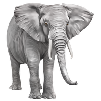 download elephant free png photo images and clipart