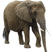 Download Free Elephant Transparent Icon Favicon Freepngimg Elephant png, download png alpha channel clipart images (pictures) with transparent background, elephant png image: freepngimg