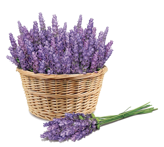 Purple Price Lavender Face Skin Sunscreen PNG Image