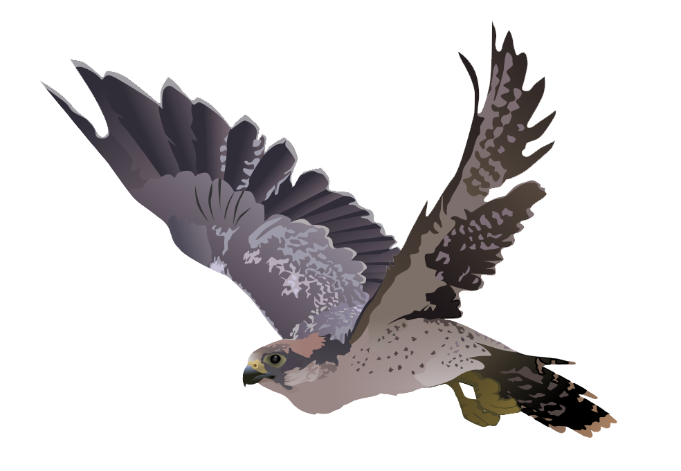 Falcon Png Picture PNG Image