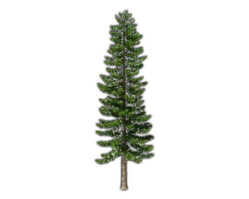 Fir-Tree Png File PNG Image
