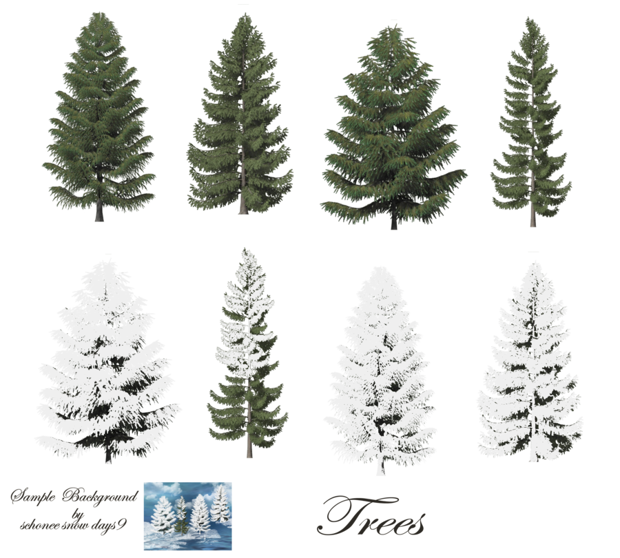 Fir-Tree Free Png Image PNG Image