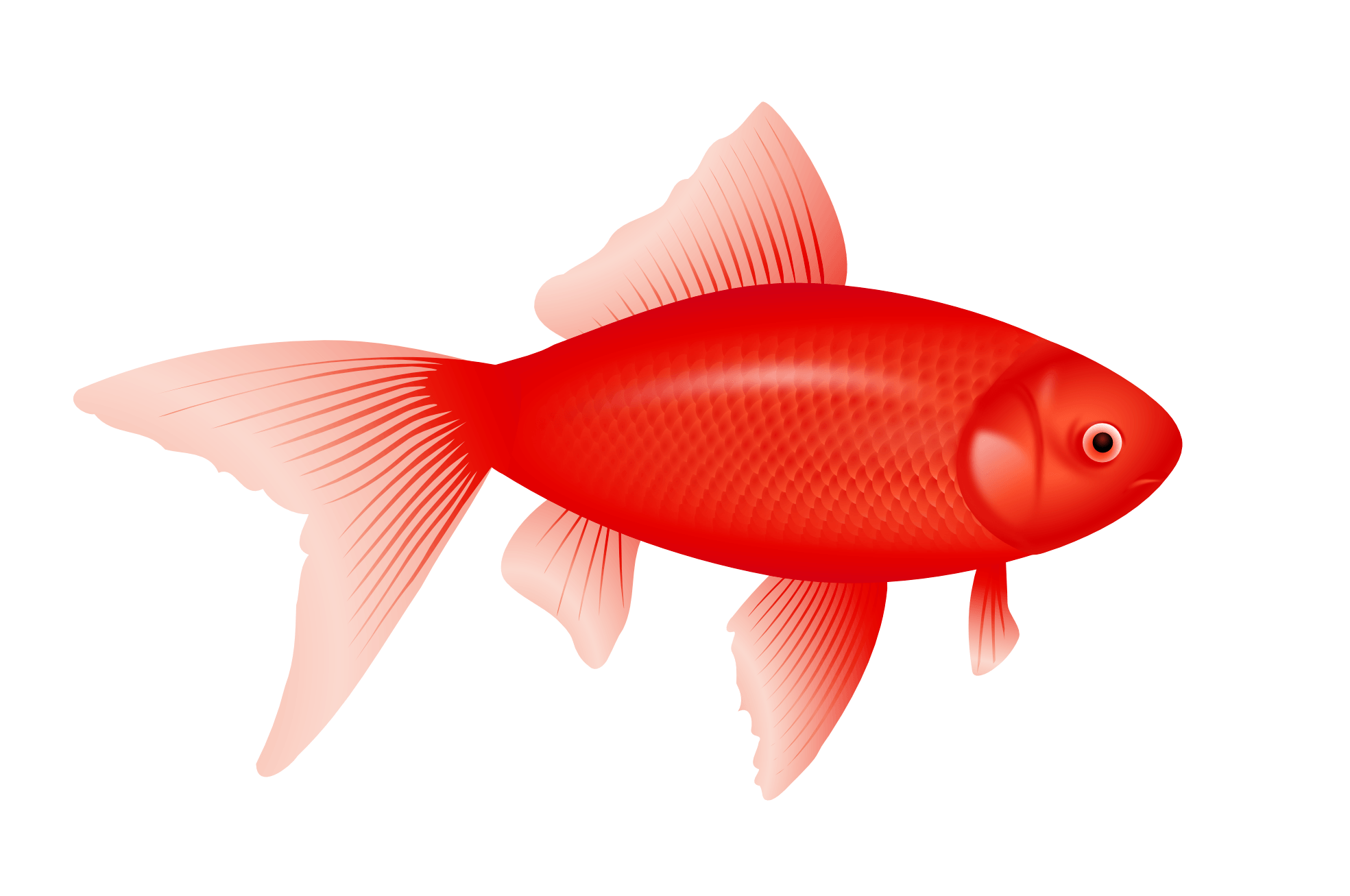 Red Fish Png Image PNG Image