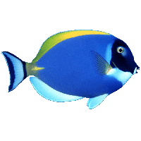 download fish free png photo images and clipart freepngimg free wolf clip art images free wolf clip art wolves
