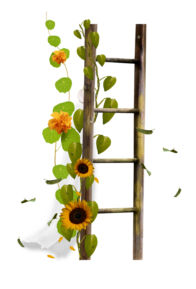 Flower Stairs Ladder Drawing Border Sticker PNG Image