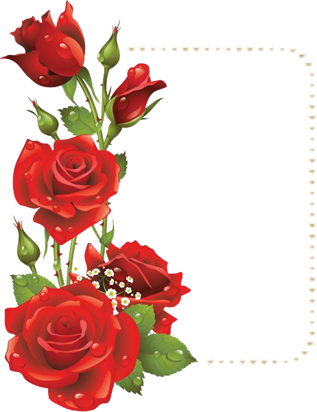 Picture Flower Rose Frame File Red PNG Image