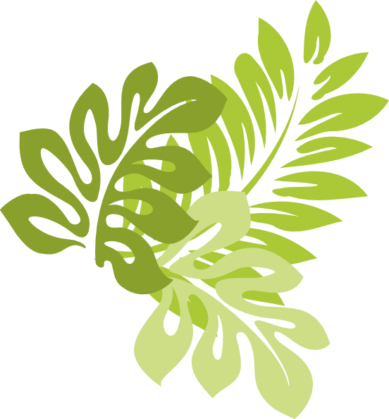 Hibiscus Hawaiian Leaves Jungle Schizopetalus Drawing PNG Image