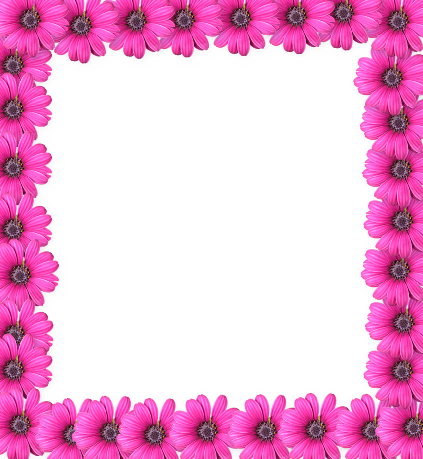 Pink Picture Frame Flower Free HD Image PNG Image