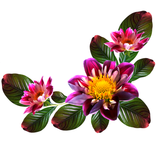 Flower Portable Computer File Graphics Network PNG Image