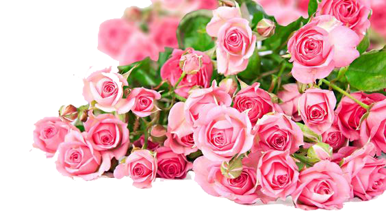 Pink Roses Flowers Bouquet Photos PNG Image
