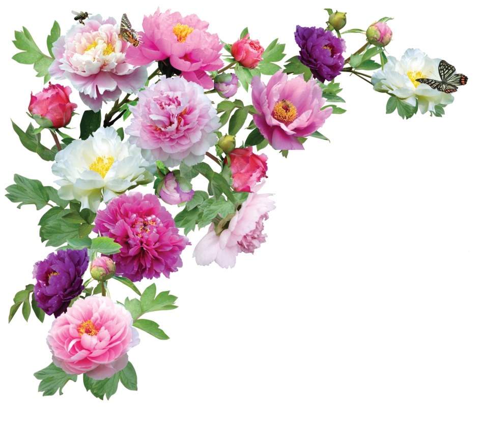 Flowers Transparent PNG Image