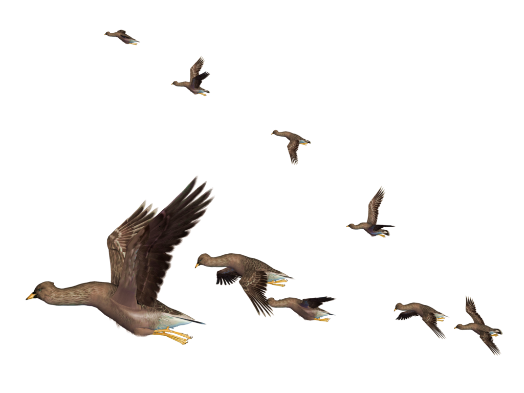 Flying Bird Clipart PNG Image
