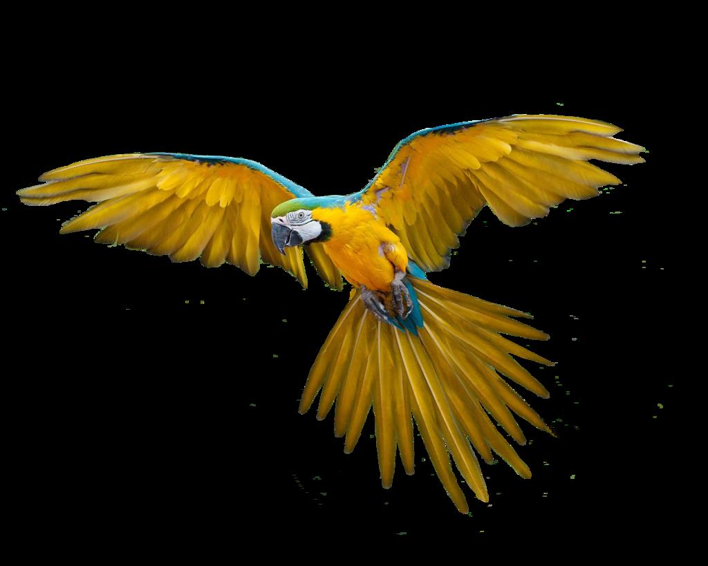 Download Flying Bird HQ PNG Image   FreePNGImg