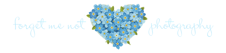 Forget Me Not Photo PNG Image