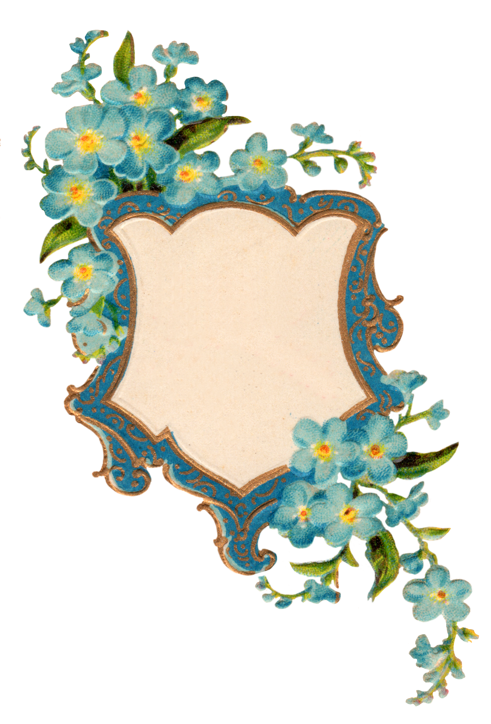 Forget Me Not Picture PNG Image