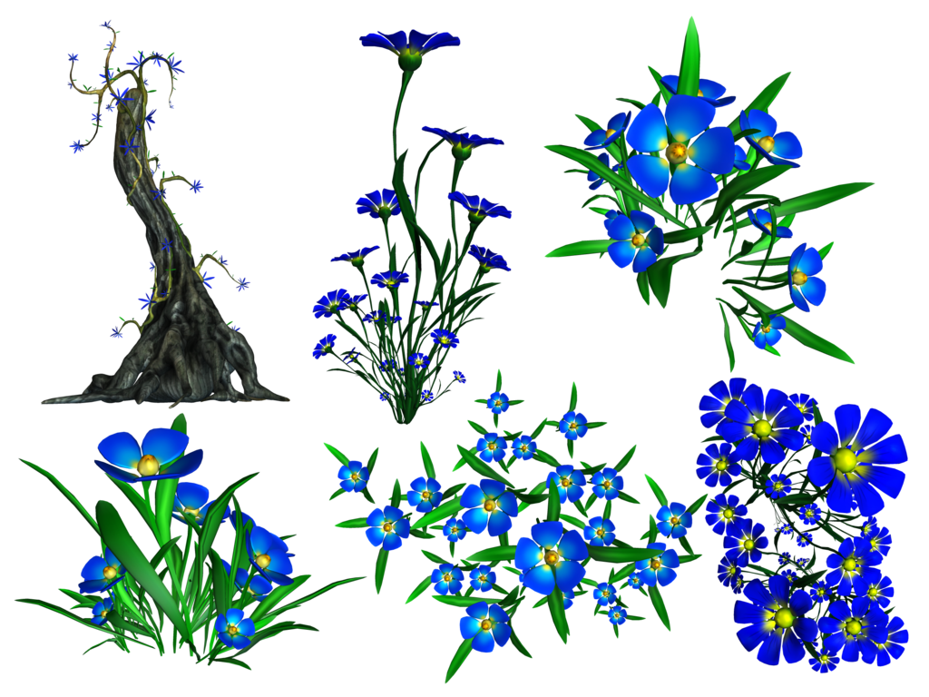 Forget Me Not Transparent Image PNG Image