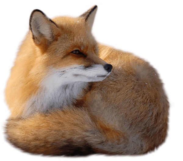Fox Png Image Download Picture PNG Image