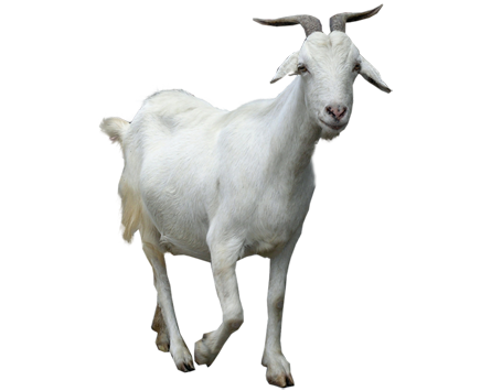 Goat Png Clipart PNG Image