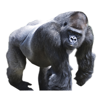 Download Gorilla Free Png Photo Images And Clipart