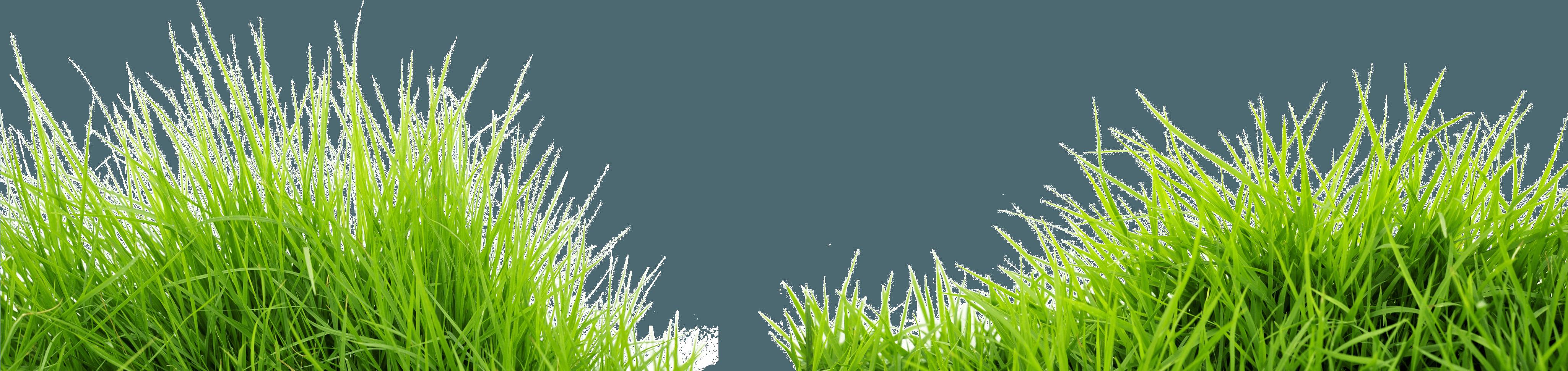 green grass png - HD4101×972