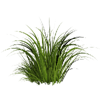 download grass free png photo images and clipart freepngimg spring flower clip art 4 spring flowers clipart