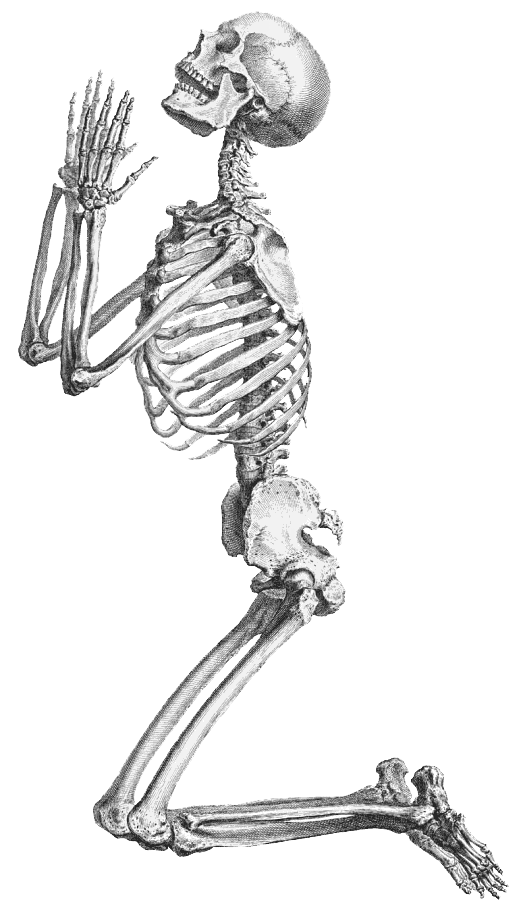 Halloween Skeleton Transparent Background PNG Image