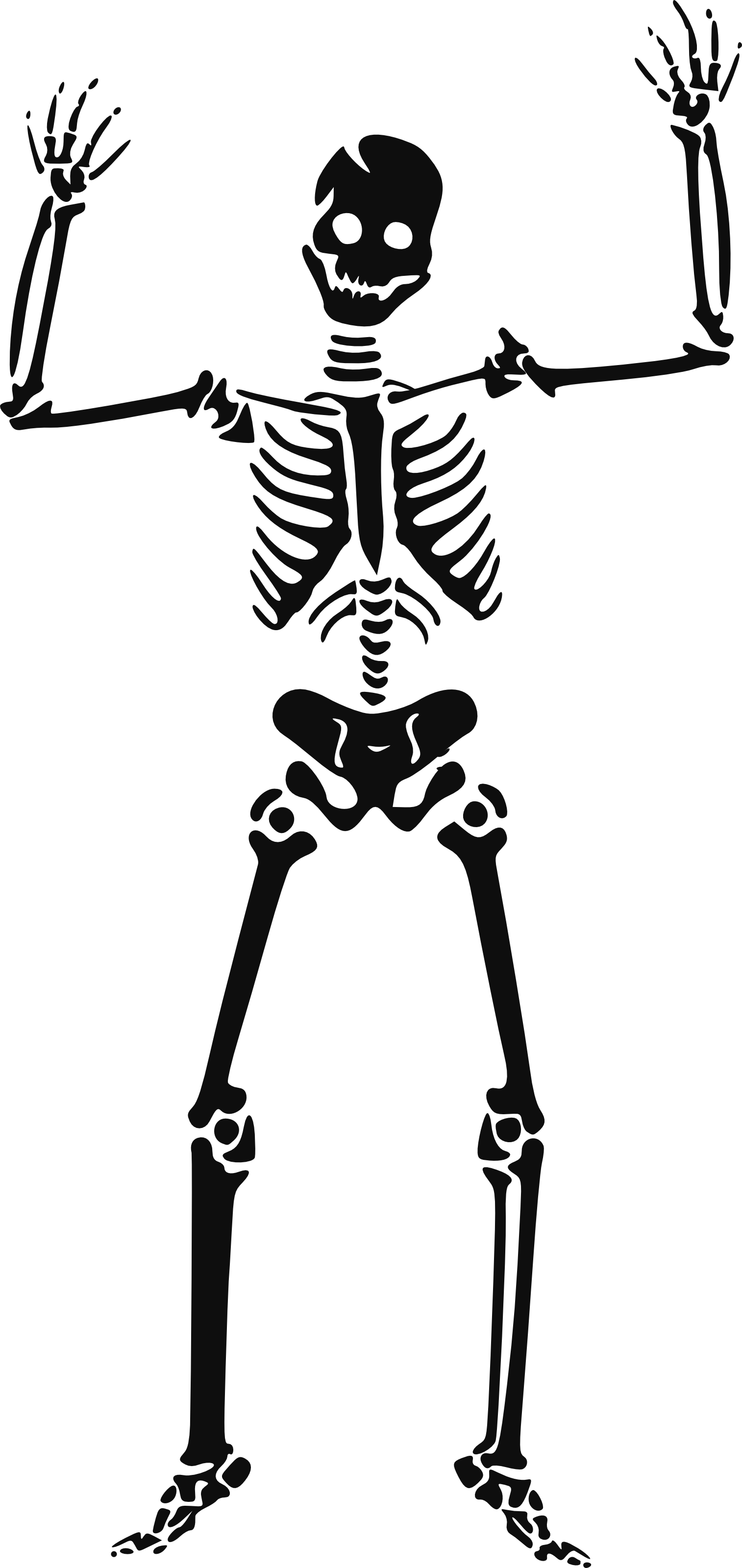 Halloween Skeleton Hd PNG Image