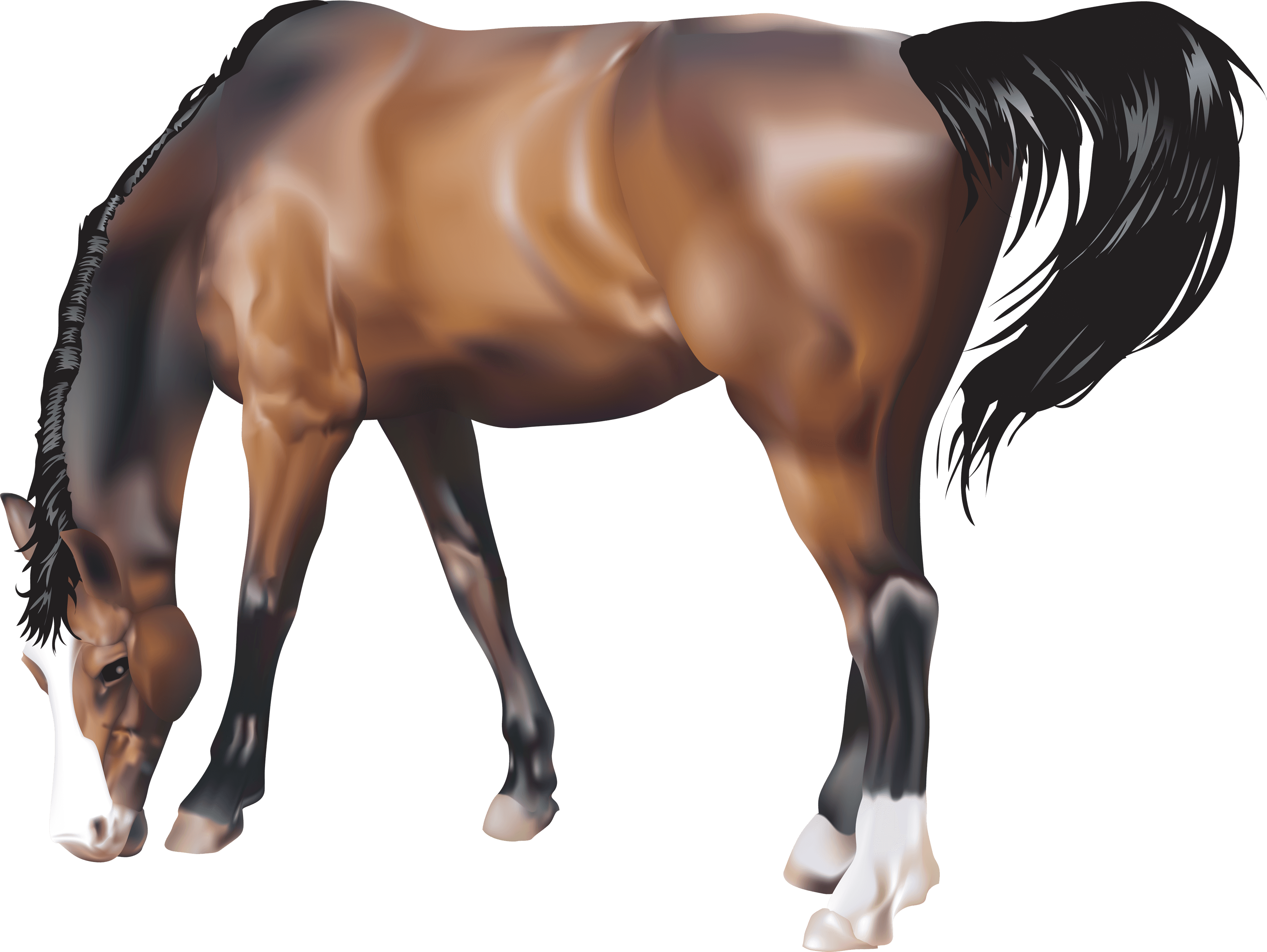 Brown Horse Png Image Download Picture Transparent Background PNG Image