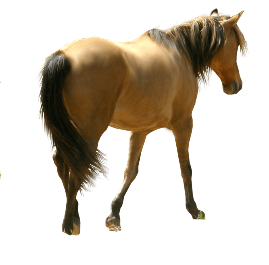 Horse Siluet Png Image Download Picture Transparent Background PNG Image