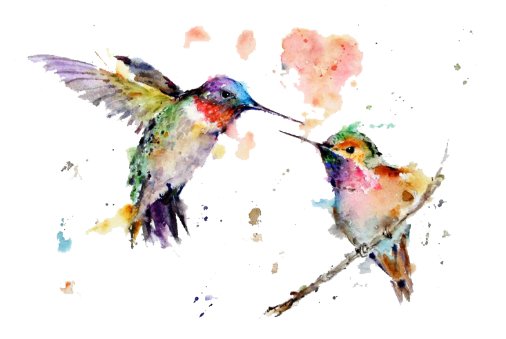 Watercolor Art Painting Drawing Hummingbird Download HQ PNG PNG Image