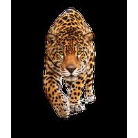 Tiger Png Image Download Tigers<B>素材格式</B>: PNG<B>素材尺寸</B>: 315x272<B>檔案大小</B>: 38.6KB<B>推薦人數</B>: 1,703