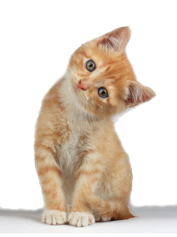 Download Kitten Clipart HQ PNG Image | FreePNGImg