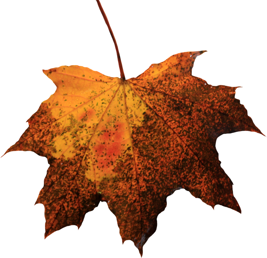 Leaf Picture PNG Image