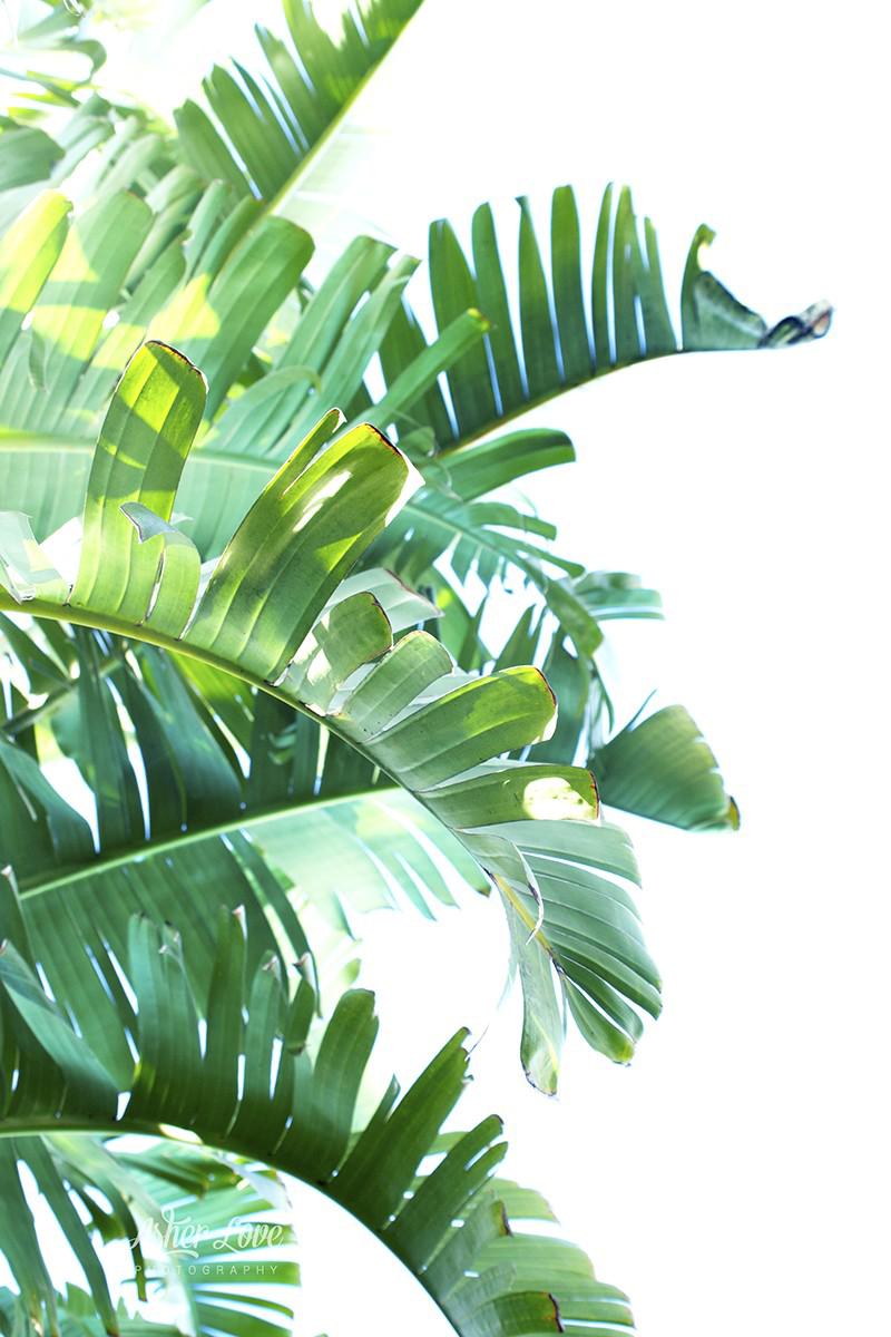 Colors clipart leaf, Colors leaf Transparent FREE for download on  WebStockReview 2020