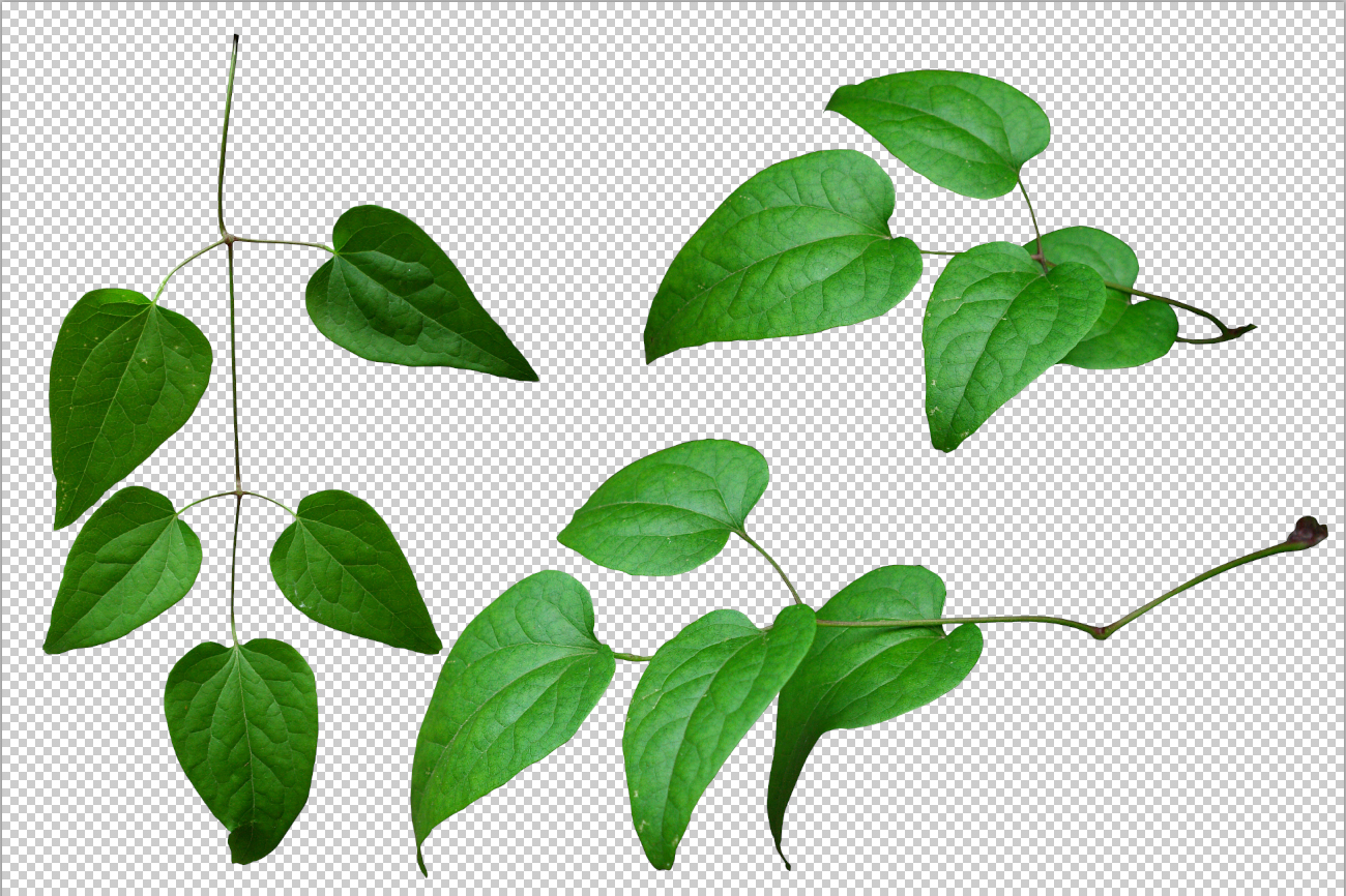Leaves Png Pic PNG Image