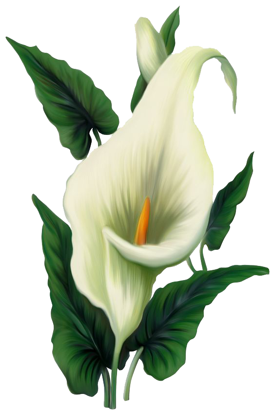 Lily File PNG Image