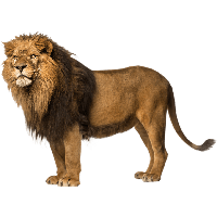 Download Lion Free PNG photo images and clipart | FreePNGImg