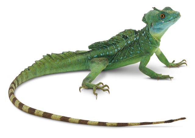 Lizard Photos PNG Image