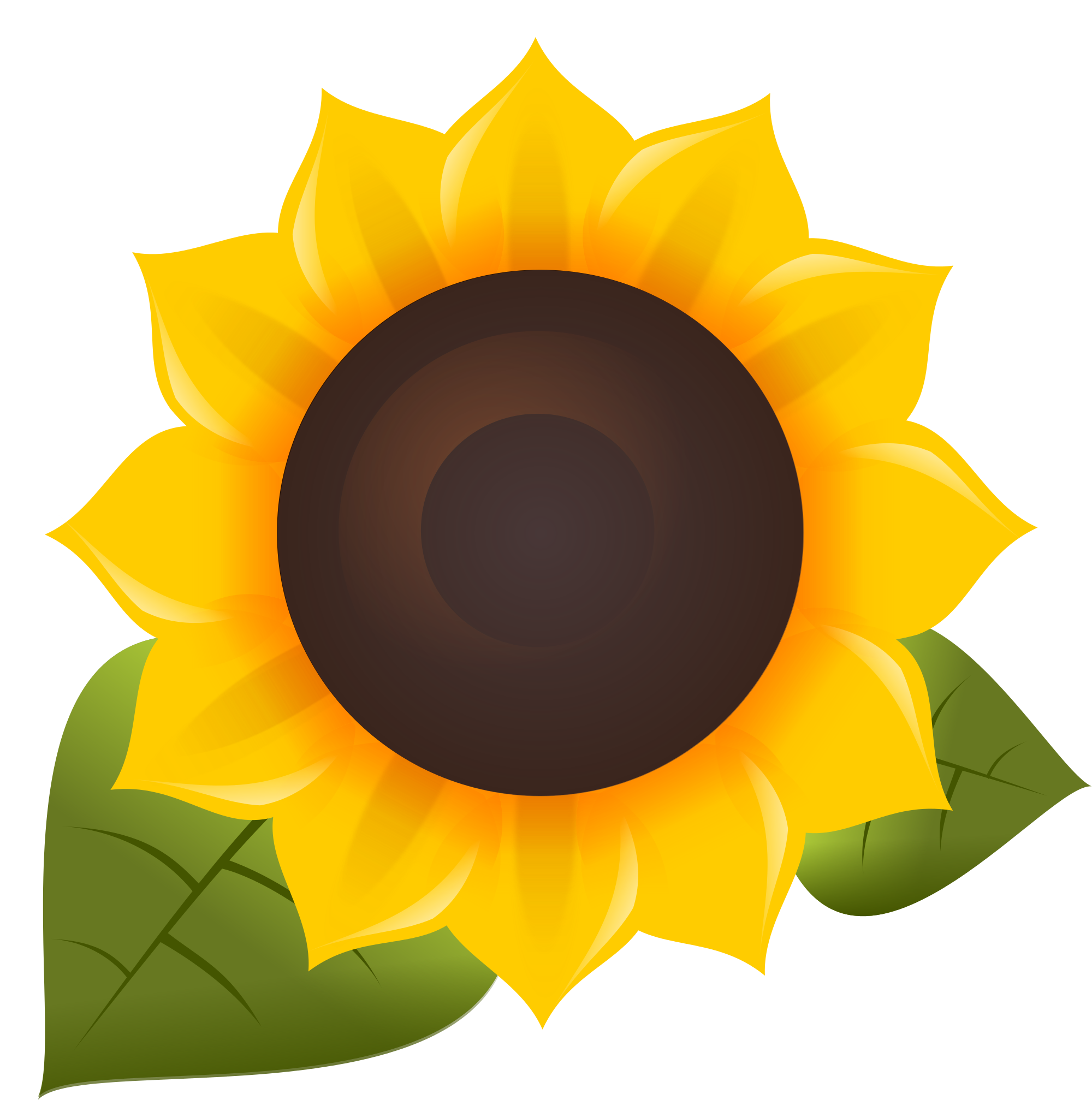Oil Common Sunflower Software Free Download PNG HQ PNG Image