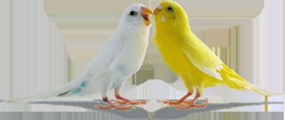 Download Love Birds Png Pic HQ PNG Image   FreePNGImg