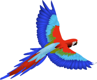 Macaw Png Clipart PNG Image