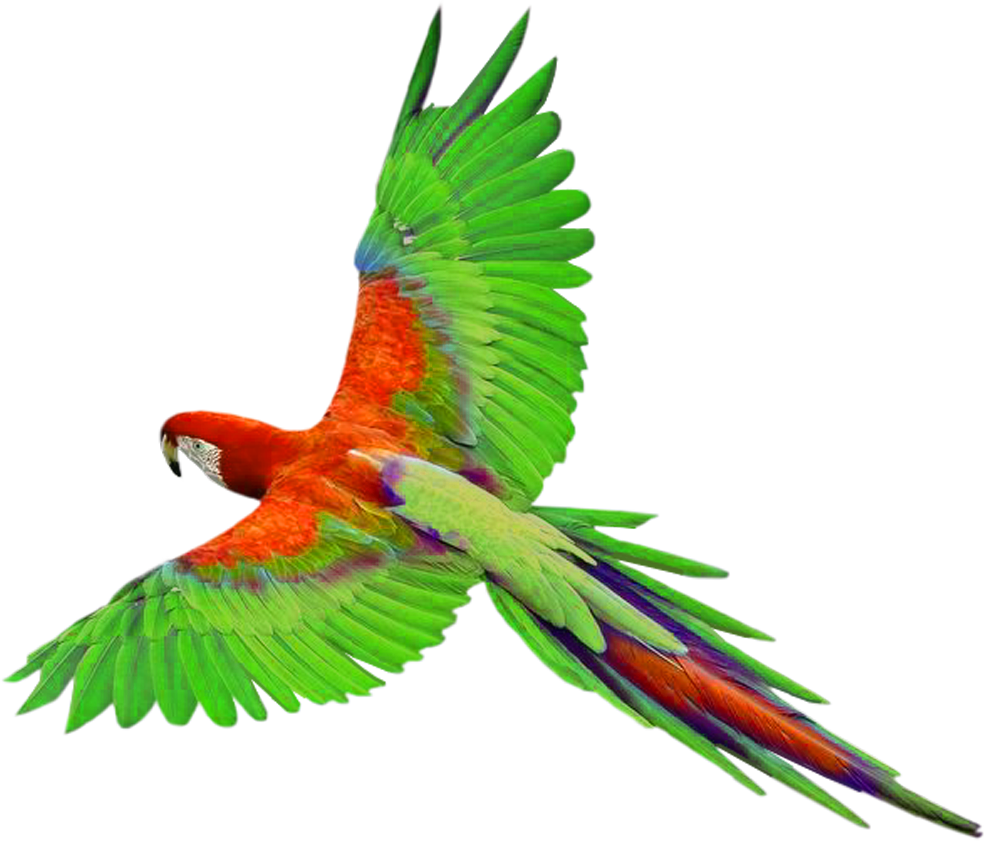 Macaw Png File PNG Image
