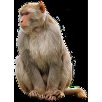 Monkey Png Picture<B>素材格式</B>: PNG<B>素材尺寸</B>: 980x1350<B>檔案大小</B>: 1.7MB<B>推薦人數</B>: 1,350