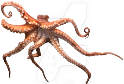 Octopus Png Picture PNG Image