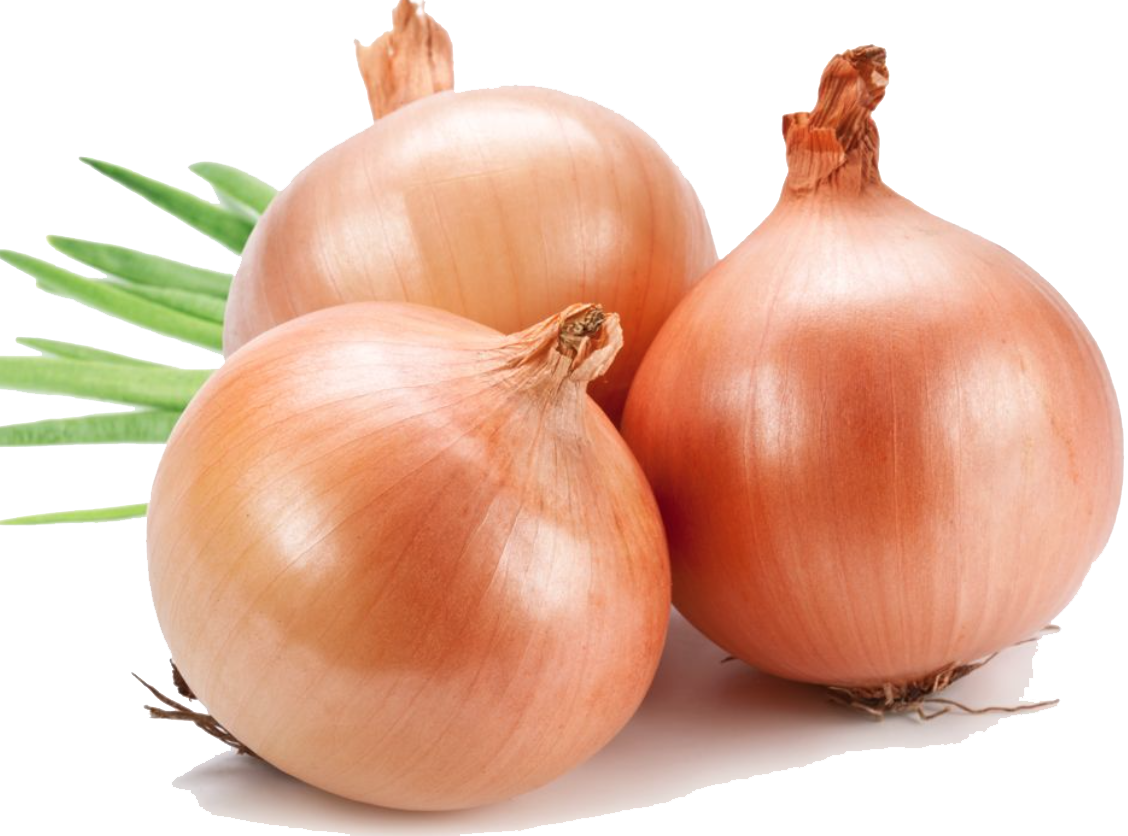 Onion Png File PNG Image