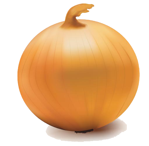 Onion Vector Transparent PNG Image