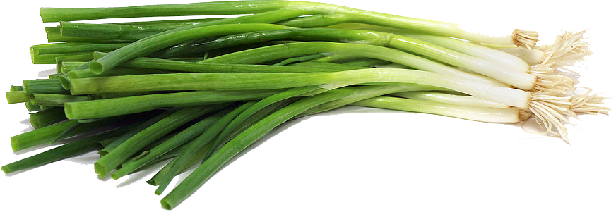 Green Onion File PNG Image